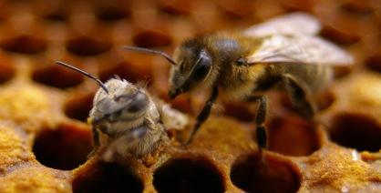 birth-of-bee